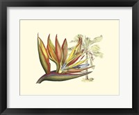 Framed Bird of Paradise II