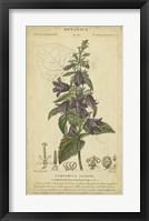 Framed Floral Botanica IV