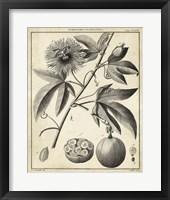 Framed Passiflora I