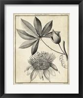 Framed Passiflora II