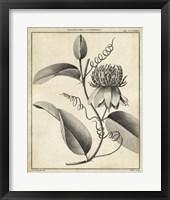 Framed Passiflora V