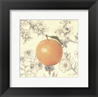 Framed Orange and Botanicals