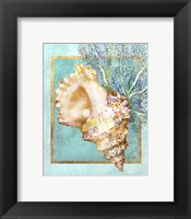 Framed Conch Shell and Coral
