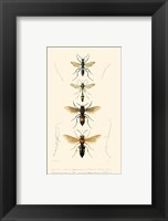Framed Antique Bees II
