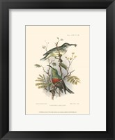 Framed Birds in Nature I