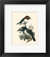 Framed Birds in Nature IV