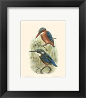 Framed Birds in Nature VI