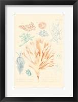 Framed Delicate Coral IV