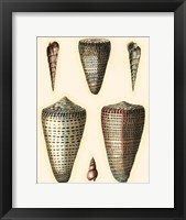 Framed Redoute Shells I
