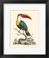 Framed Bill Bird