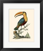 Framed Toco Toucan