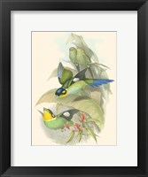 Framed Small Birds of Tropics I