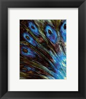 Framed Feather II