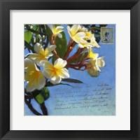 Framed Plumeria & Postage III