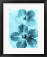 Framed Forget Me Not Blue I
