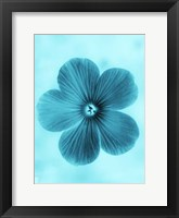 Framed Forget Me Not Blue II