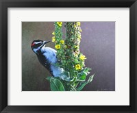 Framed Woodpecker Mullen