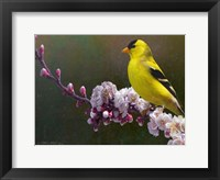 Framed Goldfinch Flowers