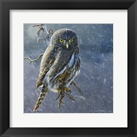 Framed Owl in Winter II