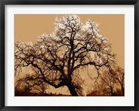 Framed Oak Tree on Tope