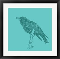 Framed Starling