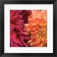 Framed Imagine Flowers