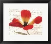 Bloom II - flower Framed Print