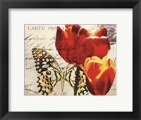 Carte Postale Tulip II Framed Print