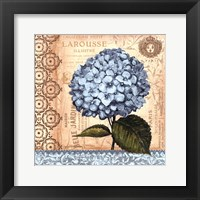 Hydrangea - mini Framed Print