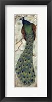 Framed Peacock II - mini