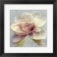 Pond Lily Sq. Framed Print