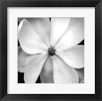 Framed Magnolia III