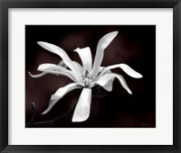 Framed Magnolia Dreams I