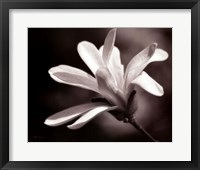 Framed Magnolia Dreams II