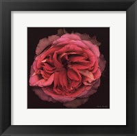 Framed Profusion