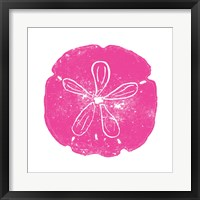 Framed Pink Sand Dollar