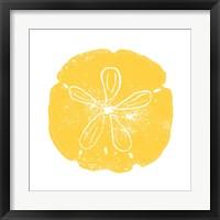 Yellow Sand Dollar Framed Print