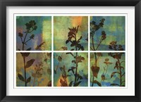 Framed Wild Flowers II