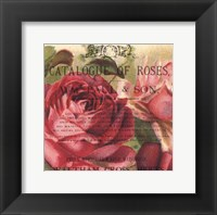 Framed Roses IV