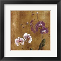 Framed Orchid Bloom I