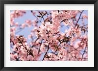 Framed Blossom Haze