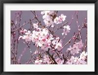 Framed Spring Blossom - Pink