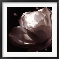 Framed White Rose II