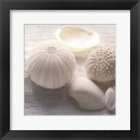 Framed Driftwood Shells IV