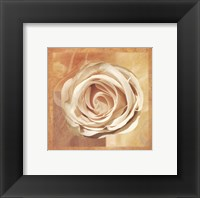 Framed Warm Rose II