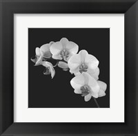 Framed Orchid Illusion II
