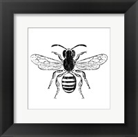 Framed Bee