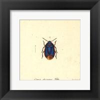 Framed Cimex Oleraceus