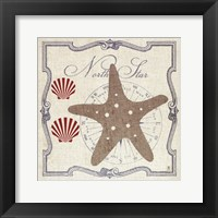 Framed Pacific Starfish