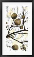 Willow Blooms II Framed Print
